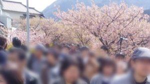 河津桜まつり 人波